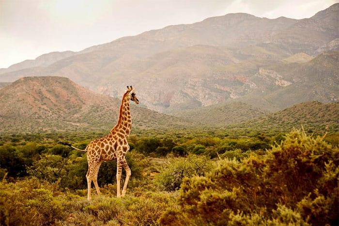 Touwsberg Nature Reserve